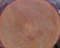 rundholz detailansicht