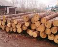 rundholz lager